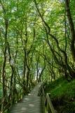 在星期一的树道路 免版税图库摄影