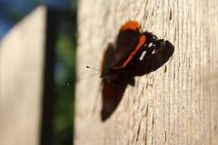 在星期五晚上篱芭的蝴蝶 免版税库存图片