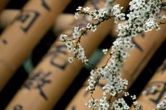"""在春天æ˜¥å¤©çš """"ç™ ½ è ‰ ² å°  花的微小的白花 免版税库存图片"""