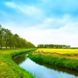 在春天、运河和树的郁金香黄色blosssom花田。 免版税库存照片