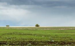 在春天农业领域的风暴 免版税库存图片