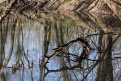 在春天小河的下落的肢体 免版税库存照片