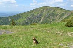在春天山的小狗 图库摄影