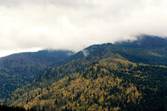 在春天山的雾 库存图片
