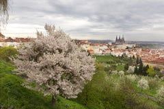 在春天布拉格市的看法有哥特式城堡、绿色自然和开花的树的,捷克 免版税库存照片