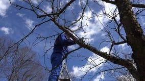 在春天庭院里供以人员修剪在梯子的苹果树分支 4K 股票录像