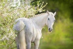 在春天开花树的马 免版税库存照片