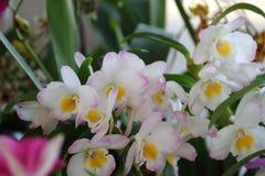 在春天开花的兰花 库存照片
