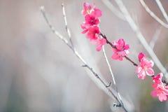在春天开花的树 库存照片