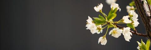 在春天开花的树 库存图片