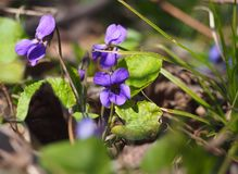在春天开花的沼地 免版税库存照片