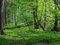 在春天日落光的自然岸边的立场 免版税库存照片
