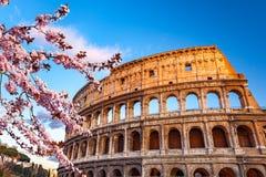在春天日落的罗马斗兽场 库存图片