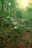 在春天期间的树森林 免版税库存图片