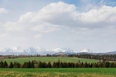 在春天期间的高Tatras 有树的草甸在前景 免版税库存图片