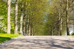 在春天期间的树胡同 免版税库存照片