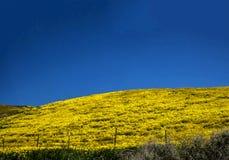 在春天期间的花田山在加利福尼亚 图库摄影