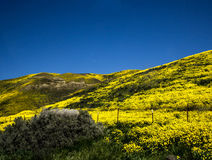 在春天期间的花田山在加利福尼亚 库存照片