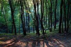 在春天木头的晚上:明亮的年轻绿色树、太阳集合和树落的长的阴影,温暖的桃红色光黑树干  免版税库存照片