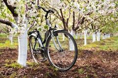 在春天果树园停放的自行车 免版税图库摄影