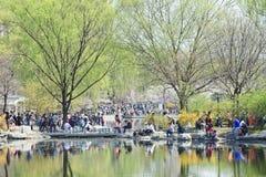 在春天樱桃树开花,北京,中国期间,在玉渊潭公园拥挤 库存照片