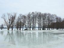 在春天洪水区域,立陶宛的美丽的树 免版税库存图片