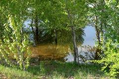 在春天洪水期间的河岸 免版税图库摄影