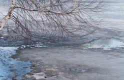 在春天湖和树的熔化的冰 库存图片