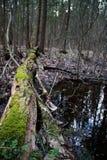 在春天湖的树 免版税库存图片