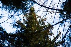 在春天湖的树 免版税库存照片