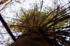 在春天湖的树 免版税图库摄影