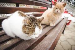 在春天的两只友好的猫 免版税库存图片