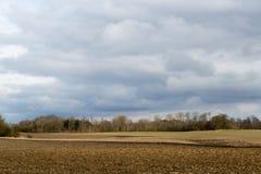 在春天的丹麦领域 免版税库存图片