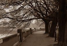 在春天的克拉科夫维斯瓦河大道 免版税图库摄影