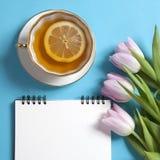 在春天的方形的笔记薄有白色牛皮纸的,桃红色郁金香和茶在蓝色背景 Copyspace 库存图片
