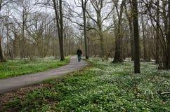 在春天的消遣步行 免版税库存图片