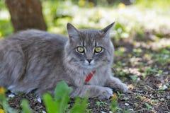 在春天的灰色街道猫特写镜头 免版税库存照片