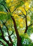 在春天的结构树 库存图片