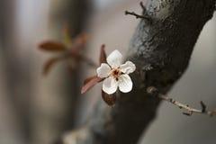 在春天的美丽的花 免版税图库摄影