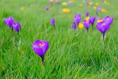 在春天的野花 免版税库存照片