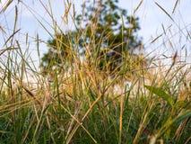 在春天的绿草 免版税库存图片