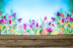 在春天背景的木板 库存图片