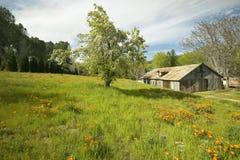 在春天花旁边五颜六色的花束的老谷仓和花菱草临近湖休斯,加州 库存图片