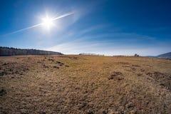 在春天草甸的晴天 库存照片