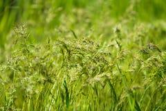 在春天草甸的绿草 库存照片
