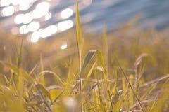 在春天草的新鲜的早晨露水在清早 晴朗的日 免版税库存图片