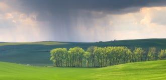 在春天领域的雨 库存照片