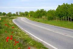 在春天风景的路 免版税库存图片