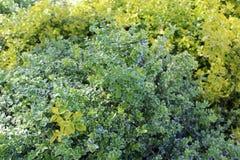 在春天,一棵惊人的草开始增长,与绿色所有树荫  免版税库存照片