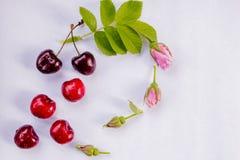在春天,在夏天,甜鲜美甜樱桃,与桃红色玫瑰色开花的樱桃,在附近是绿色叶子,  免版税库存照片